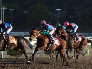 在豪日本人ジョッキー賀谷祥平 高知競馬で騎乗開始 その3
